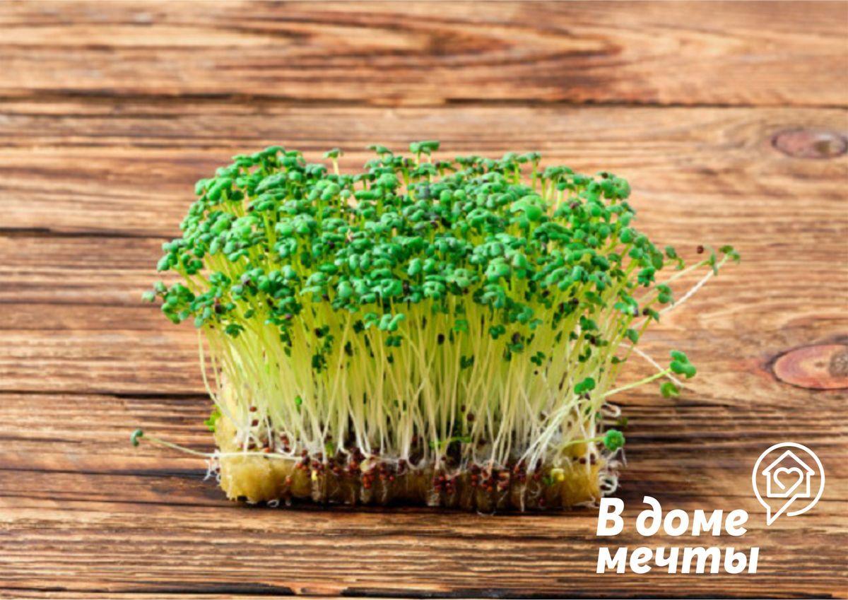 Польза молодой зелени и микрогрина