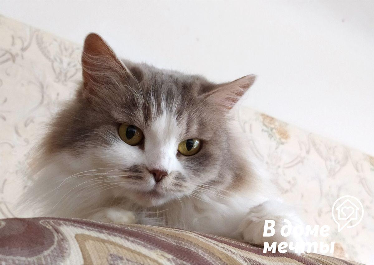 Потолочные и подвесные домики для кошек