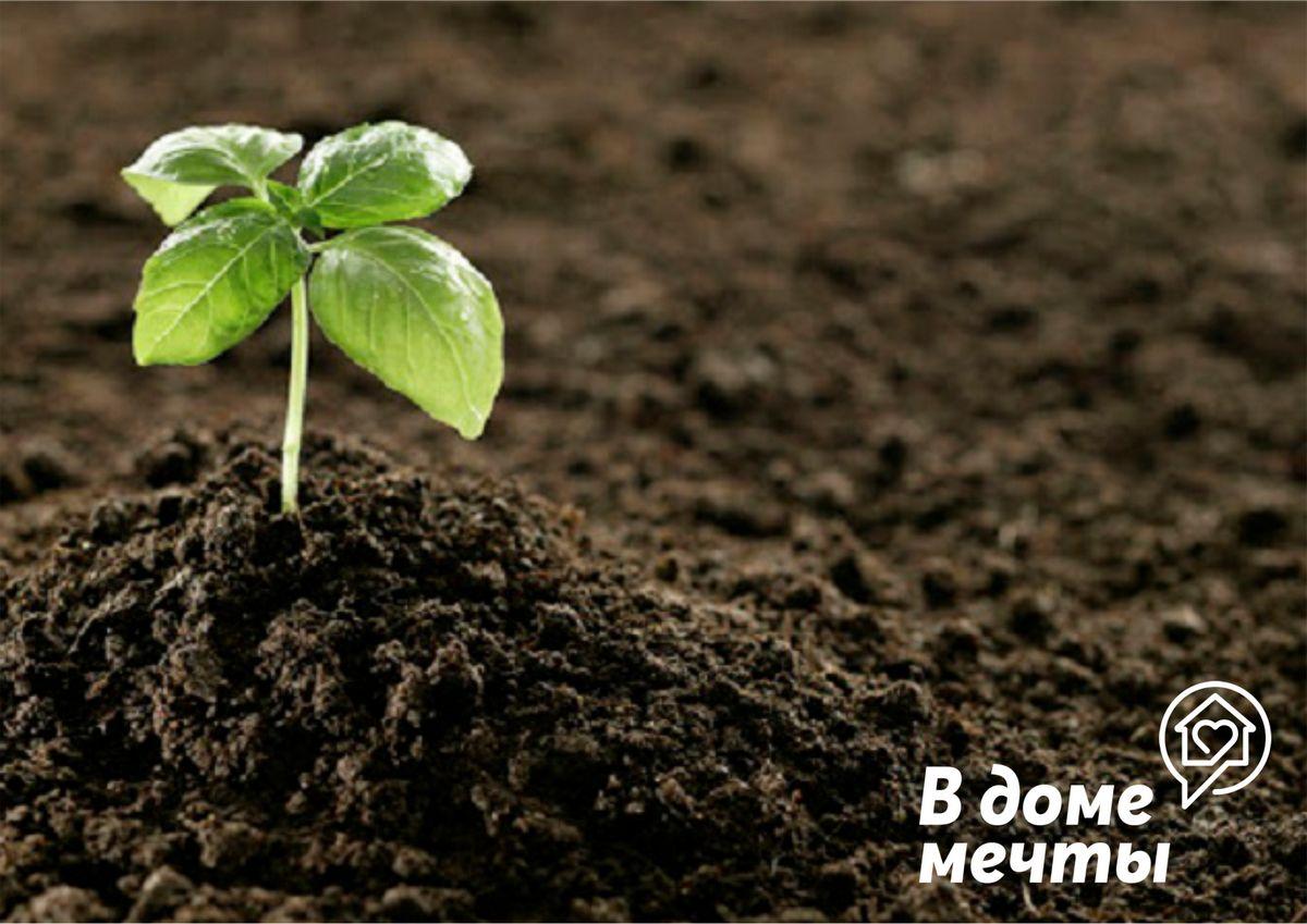 Посев микрогрина и зелени