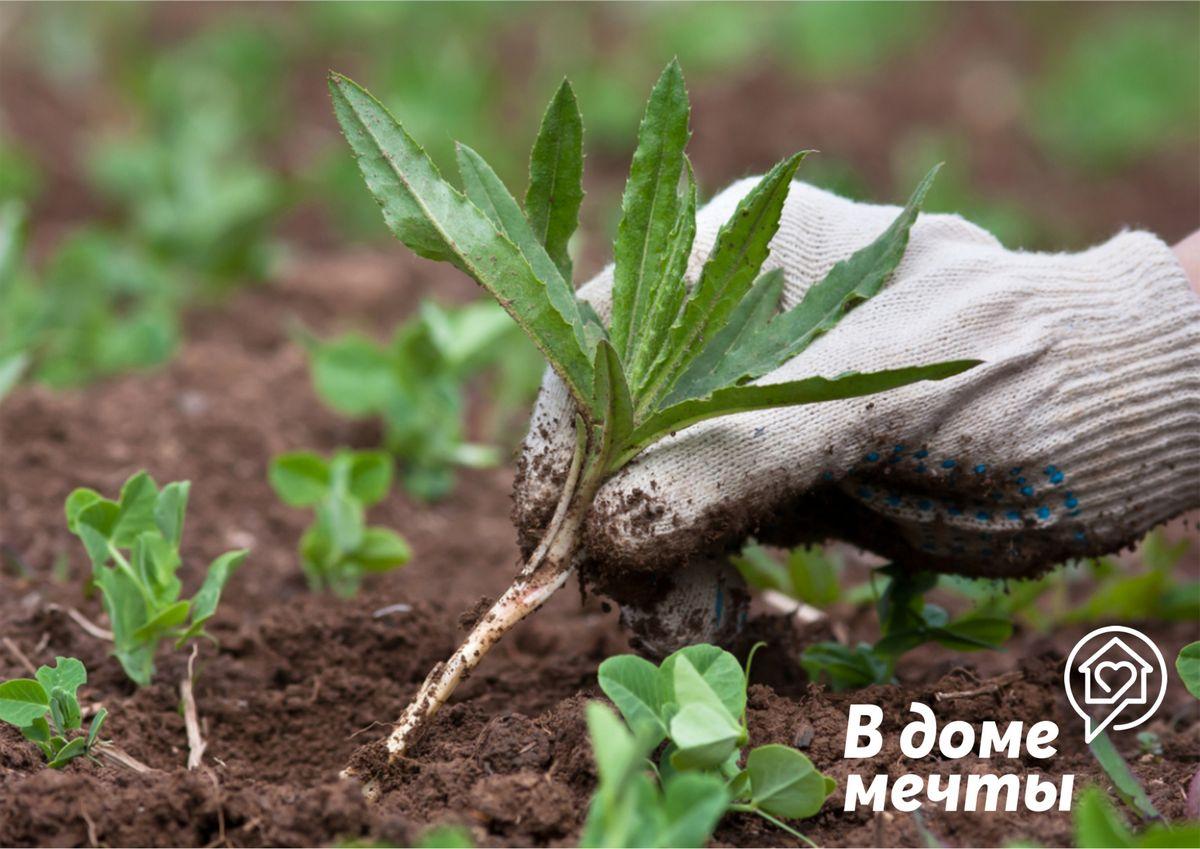 Избавить от сорняков в огороде