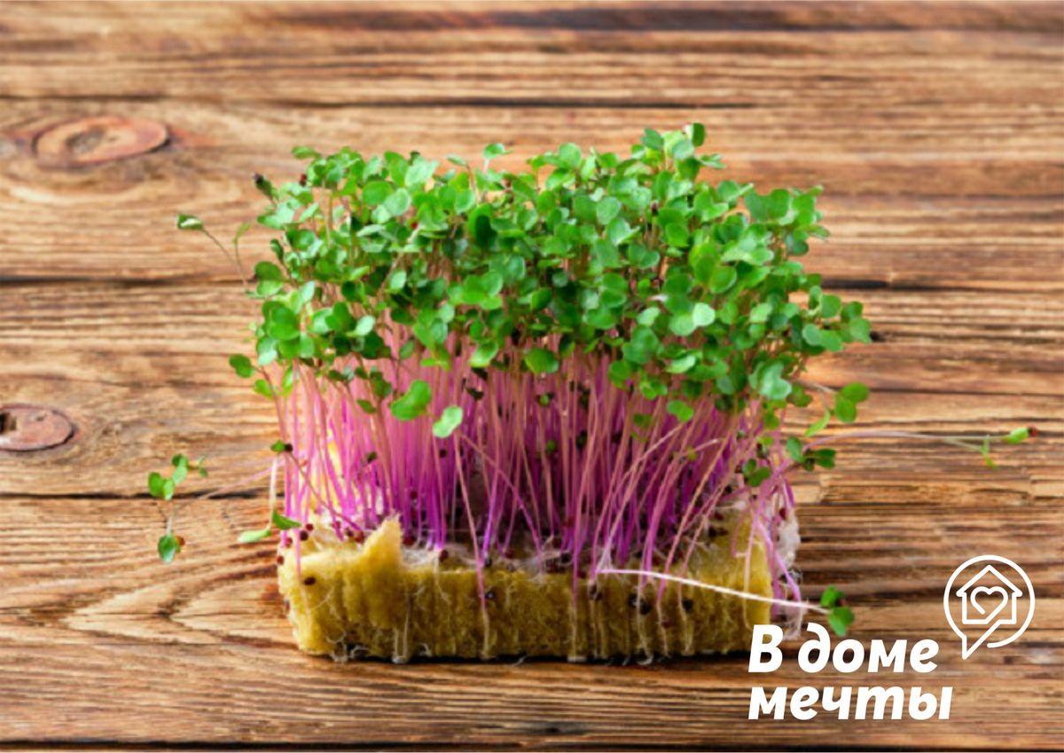 Где лучше всего выращивать микрогрин и зелень