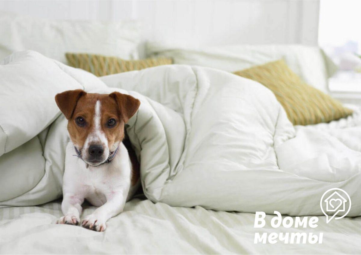 Почему собаки крутятся на месте