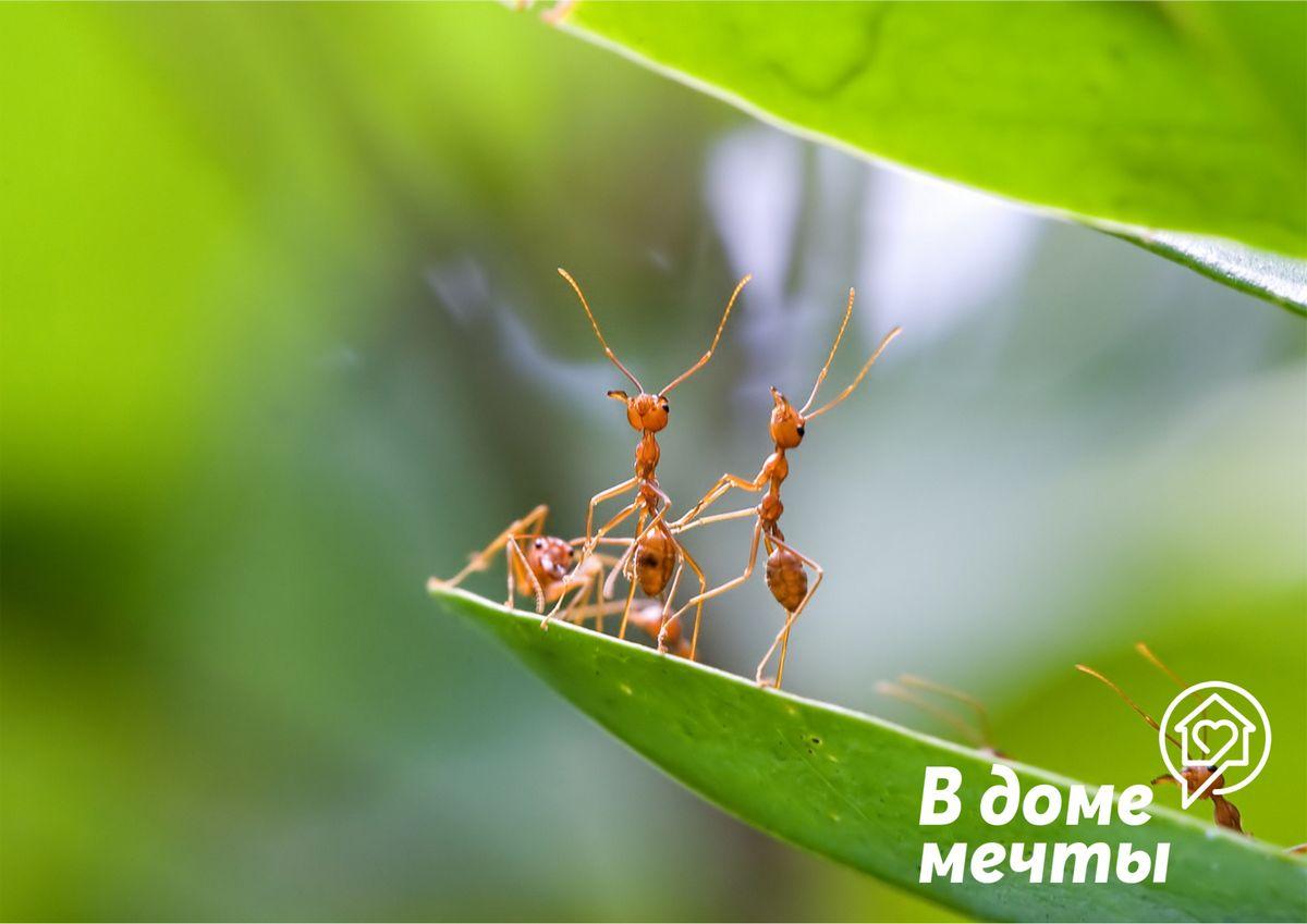 Прогнать муравьев
