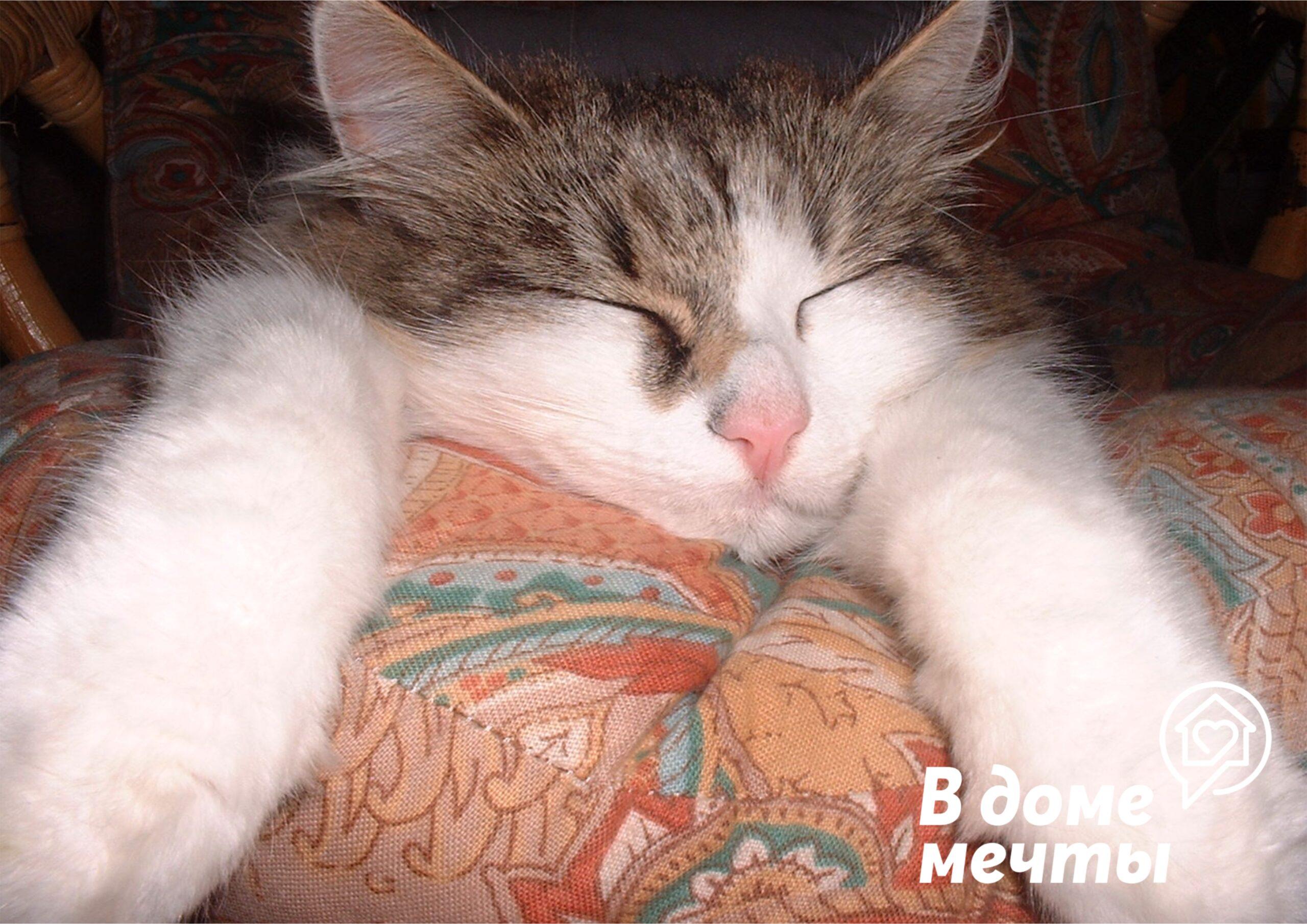 Почему мебель для домашних животных не обивают тканью?