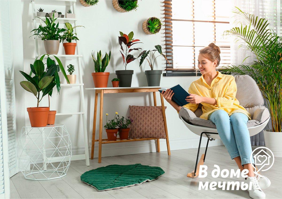 Лучшие комнатные растения для маленьких квартир