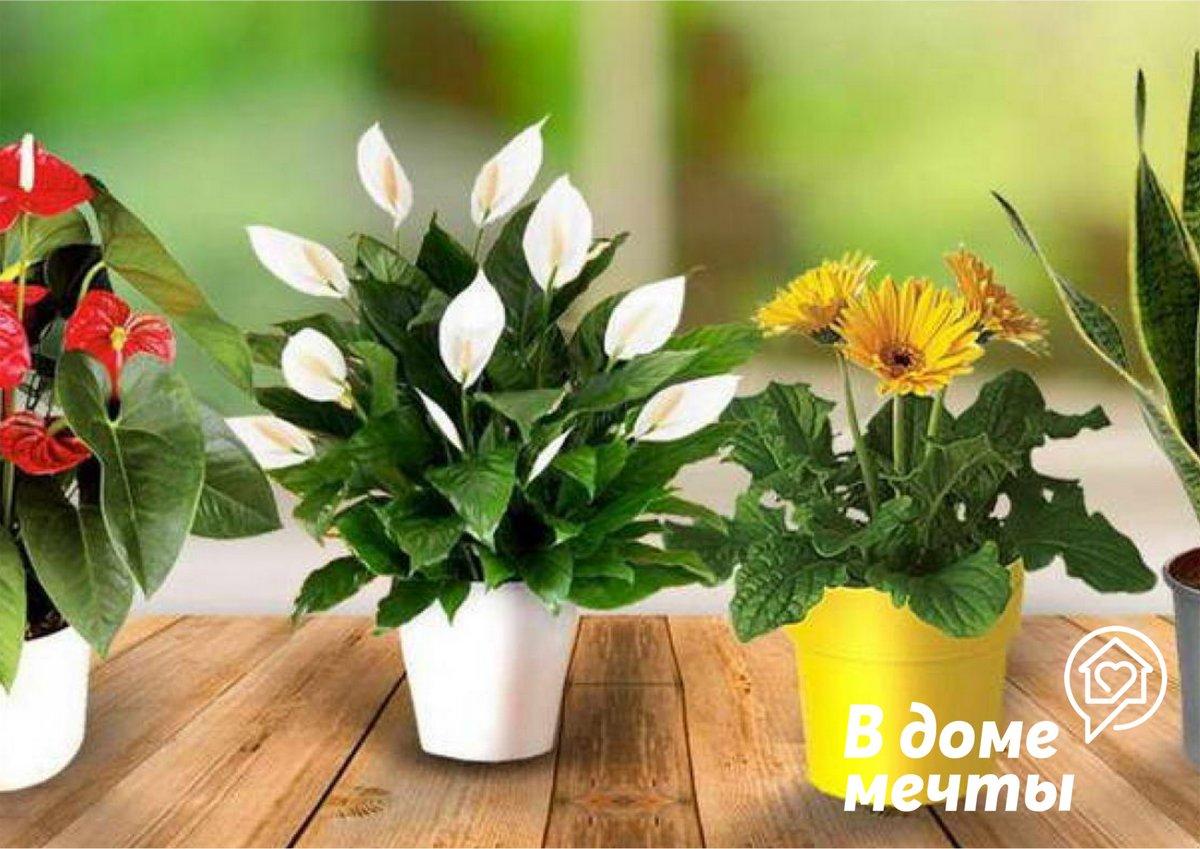 Подкормка комнатных растений зимой 7 простых домашних удобрений