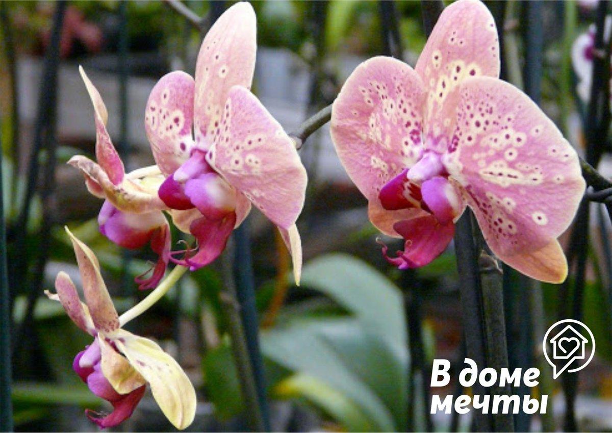 Что нужно знать еще про орхидеи?!