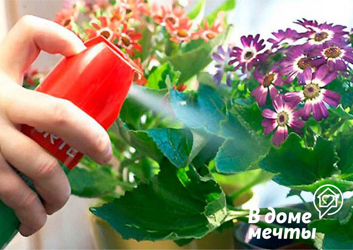 Какими способами можно избавиться от мошек в цветах