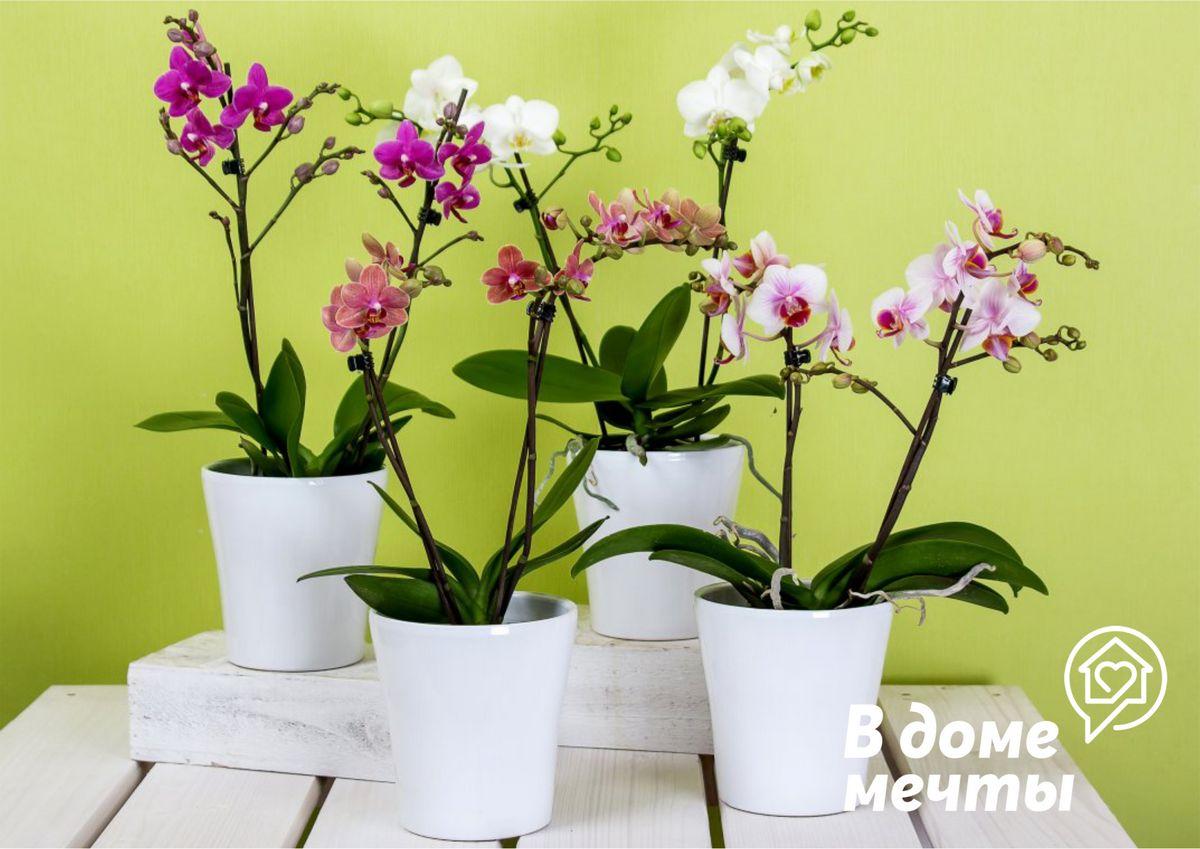 4. Орхидея
