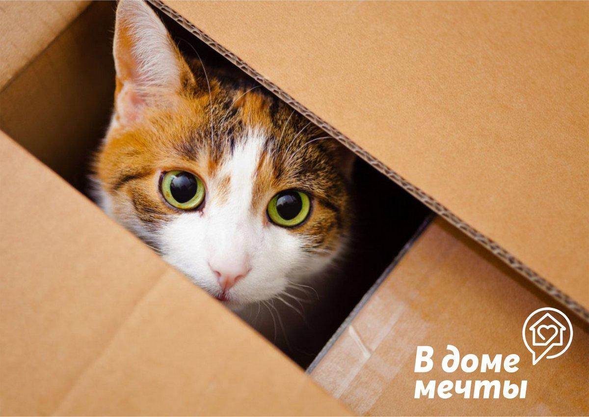 пустая коробка из под домика
