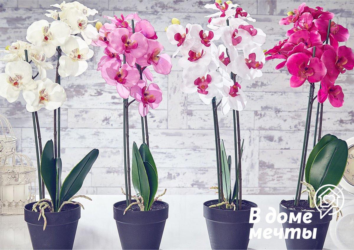 выращивании орхидей