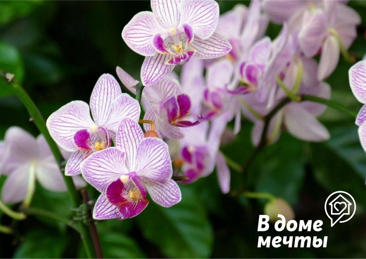 Обрезка орхидей