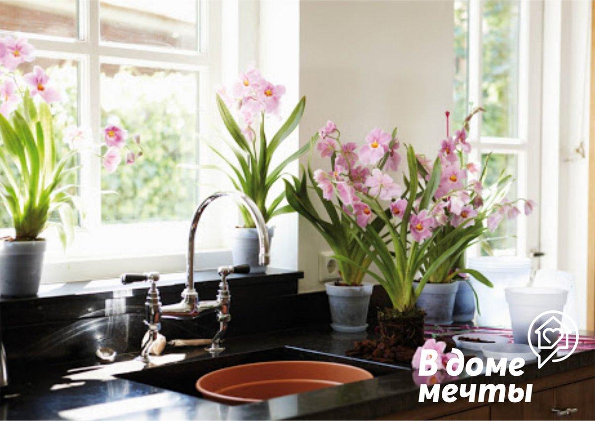 Где и как расставить растения кухня