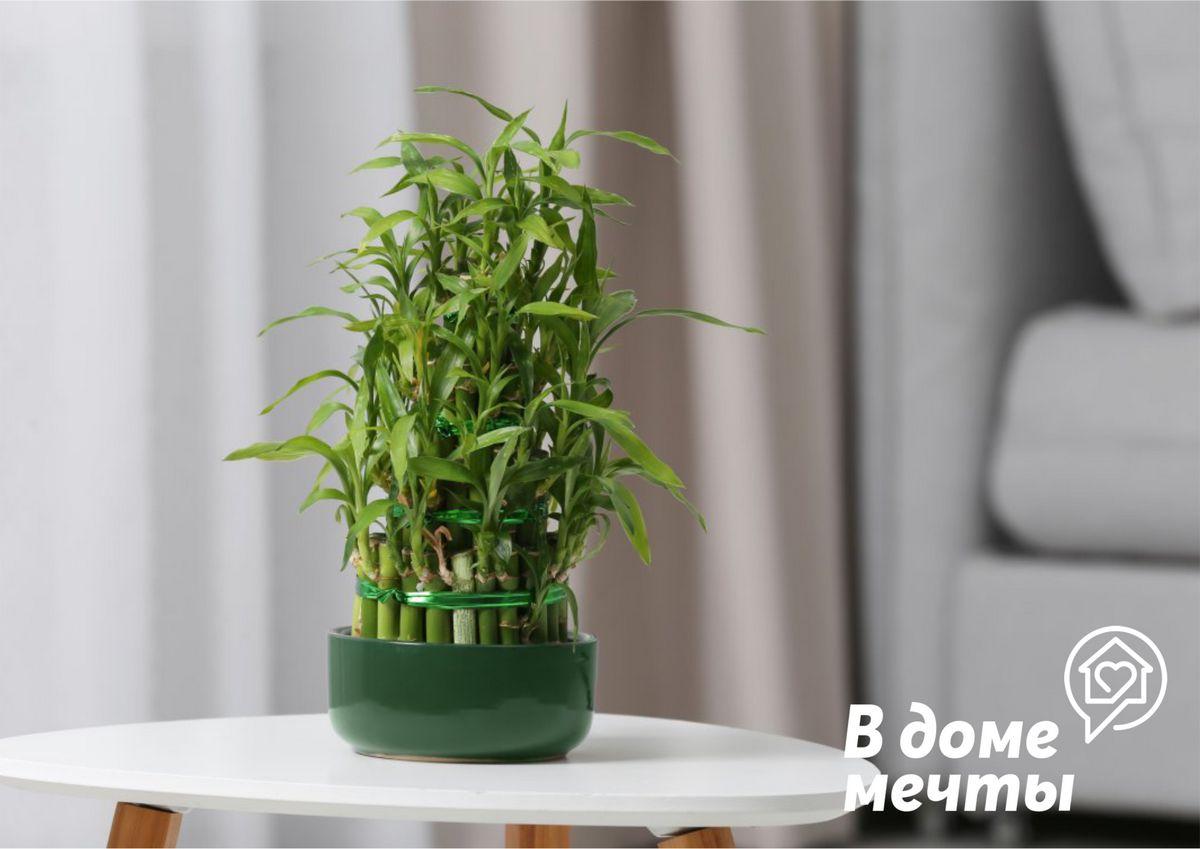 5. Счастливый бамбук