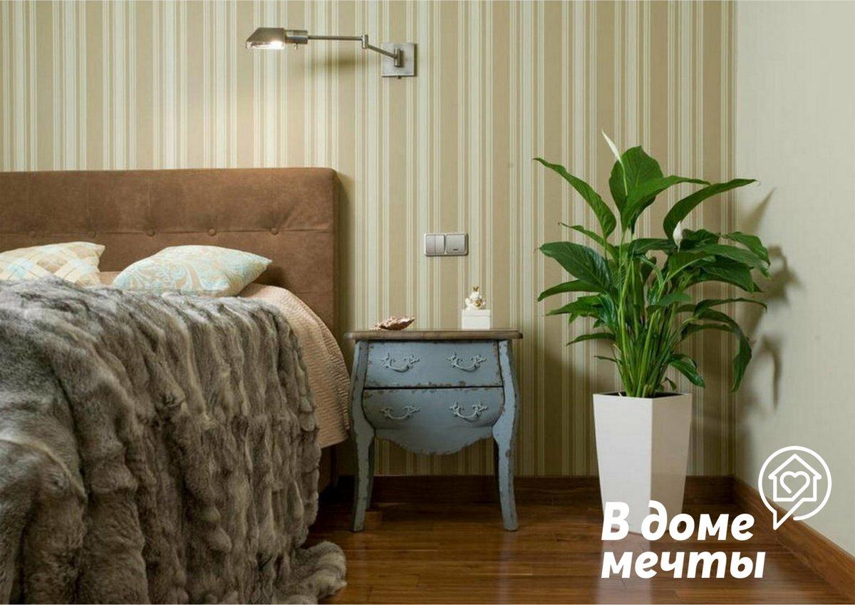 Где и как расставить растения спальня