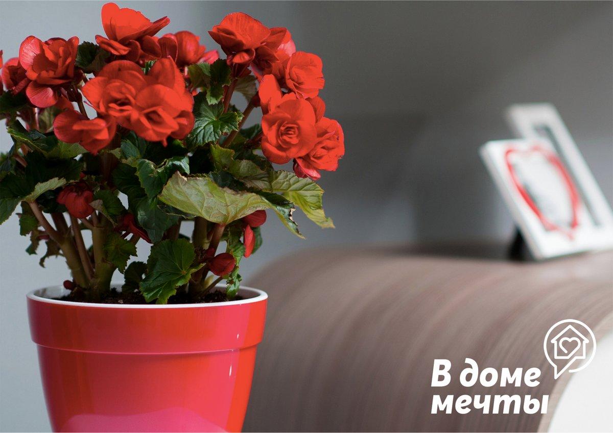 Как украсить квартиру с помощью цветов и растений