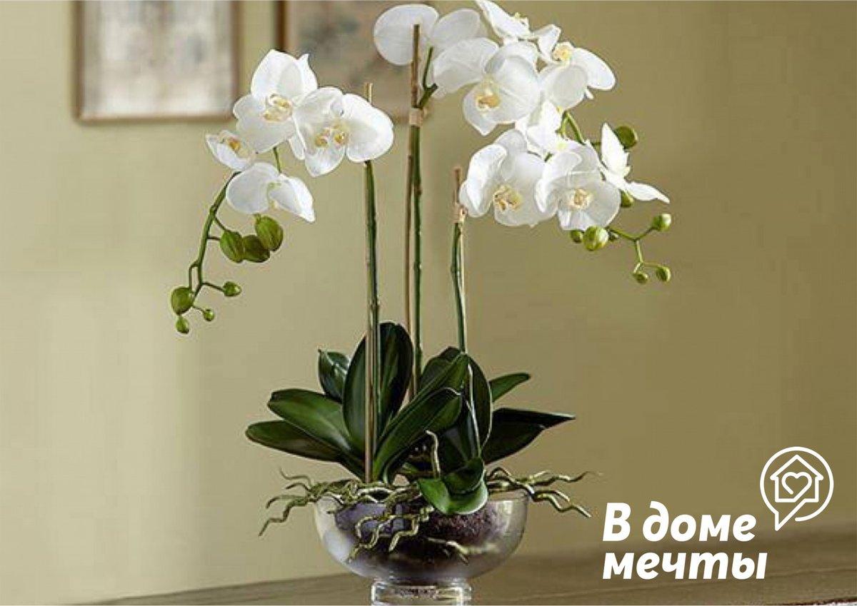 Все, что нужно знать про орхидеи