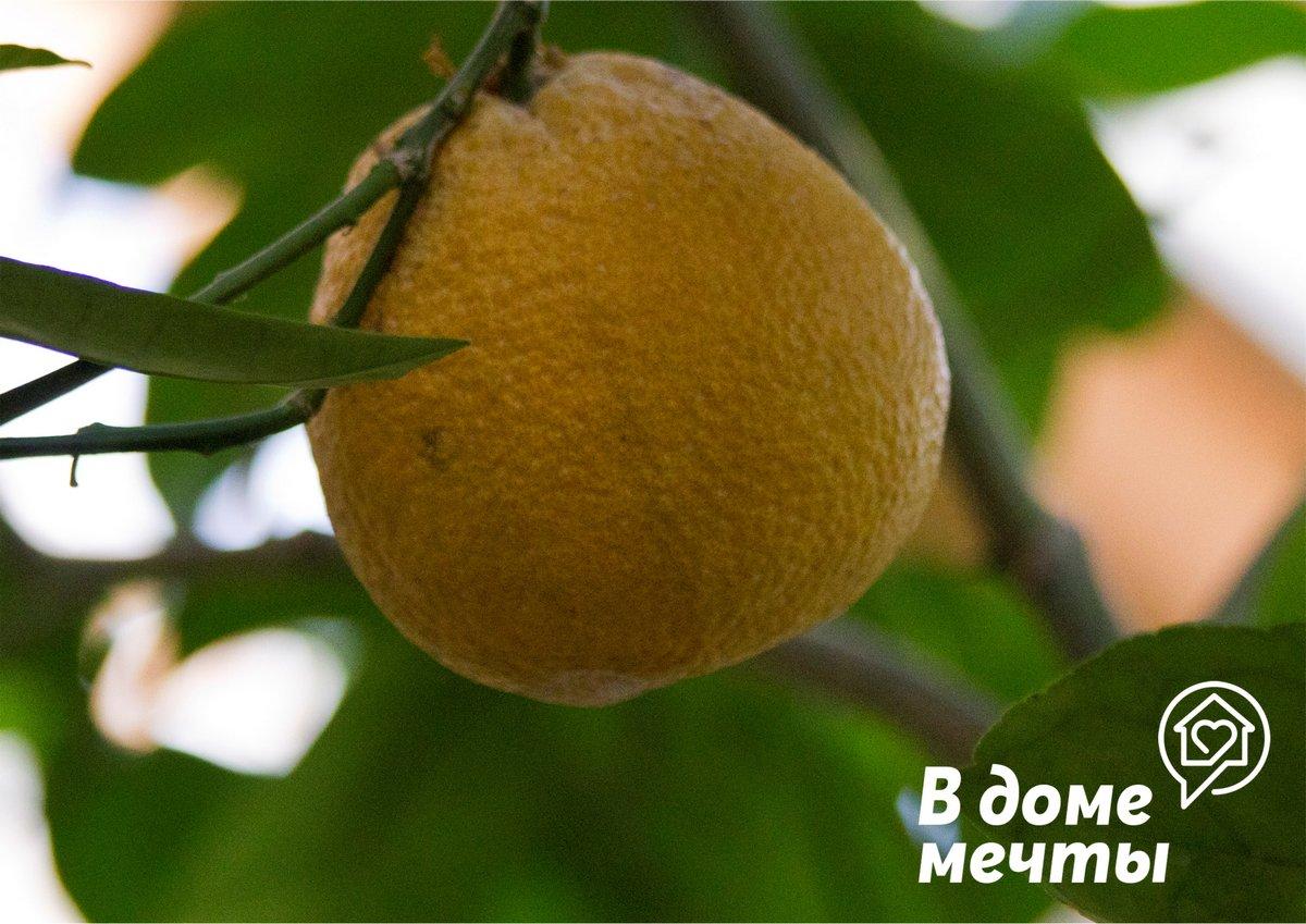 Как ухаживать за цитрусовыми: топ-7 принципов ухода