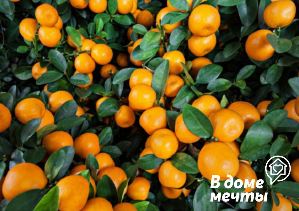 Выбираем ароматные цитрусовые к праздникам