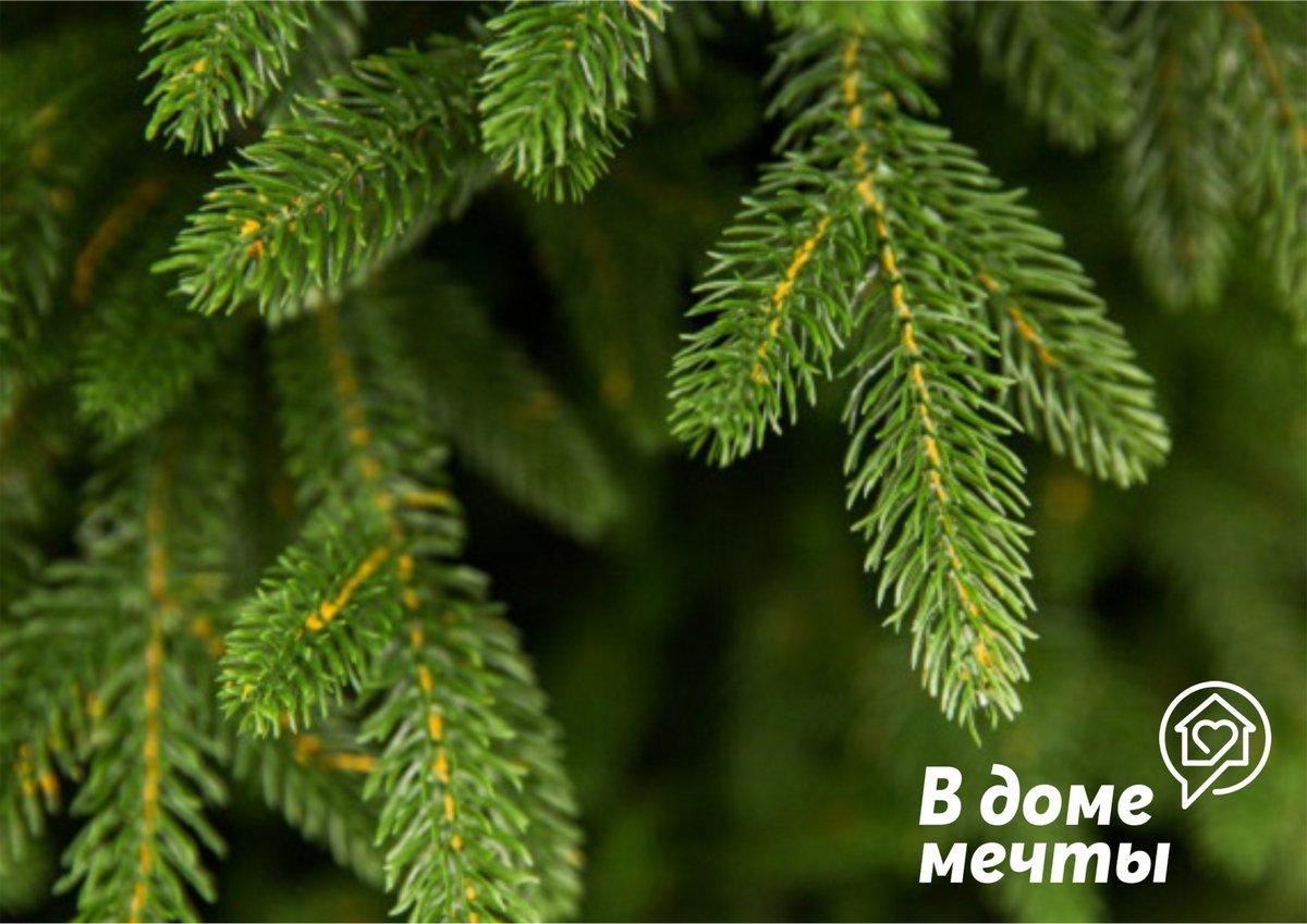 Идеальная елка: правила выбора главного атрибута зимних праздников