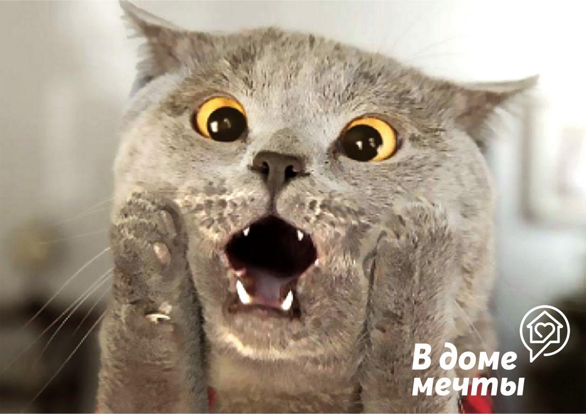 Дорогая, я отвлеку кота! Чем занять домашних животных во время ремонта