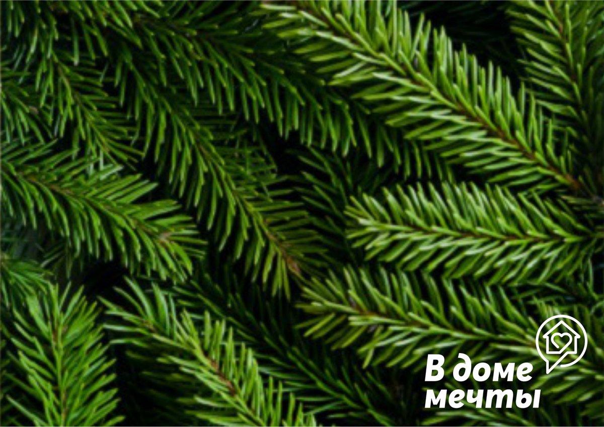 Топ-9 способов сохранить елку свежей надолго