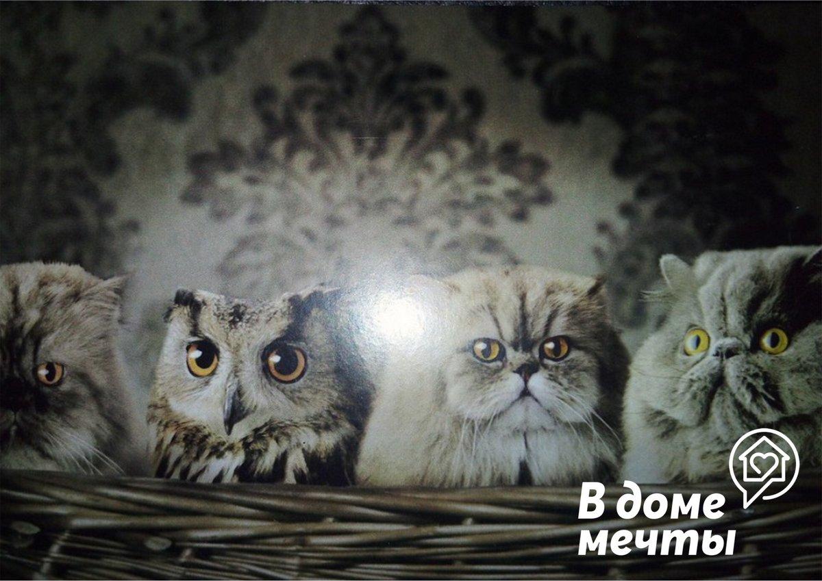 Персидская кошка - лучший друг человека