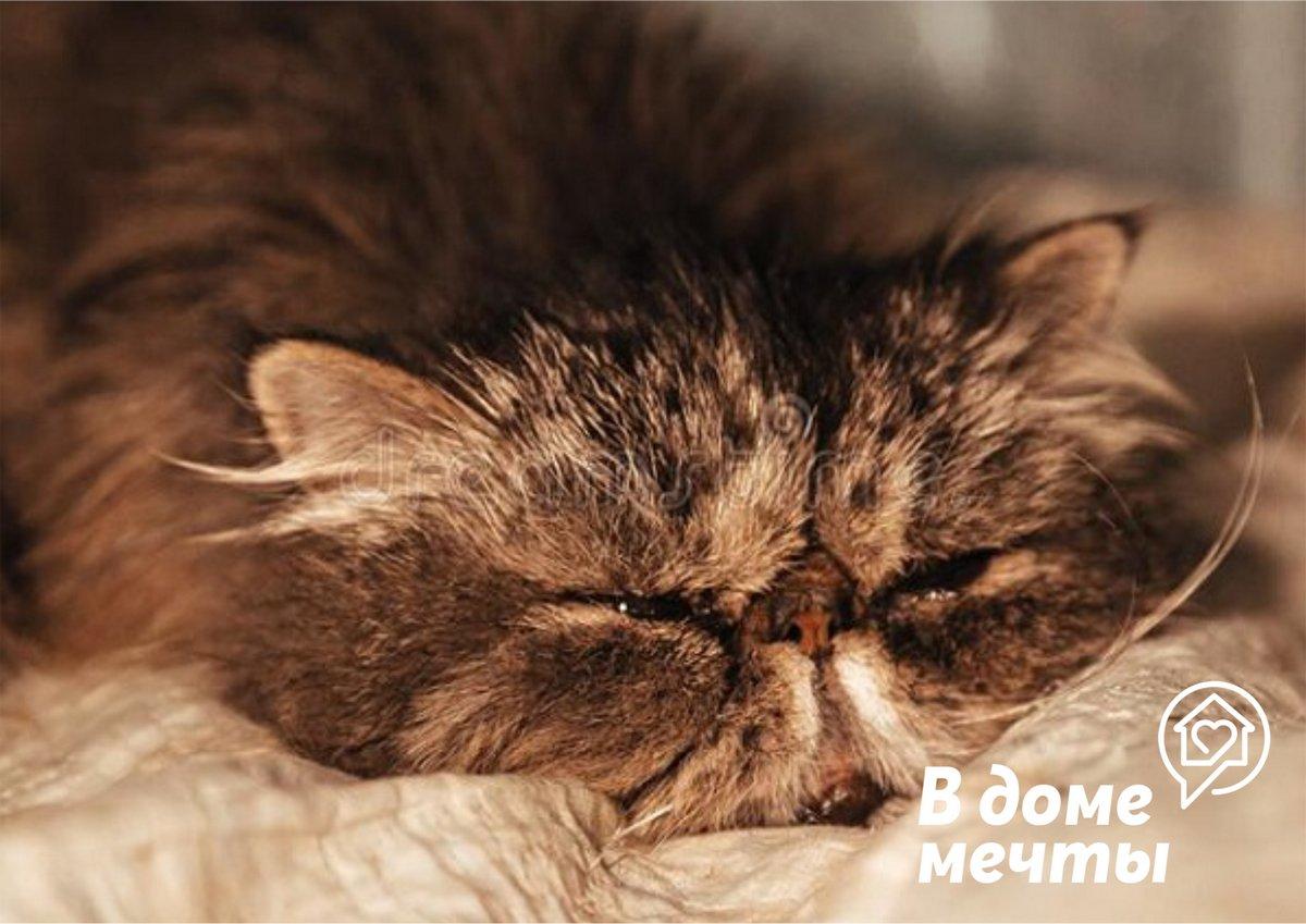 Корма эконом-сегмента и очень дешевые продукты питания для котов покупать не нужно