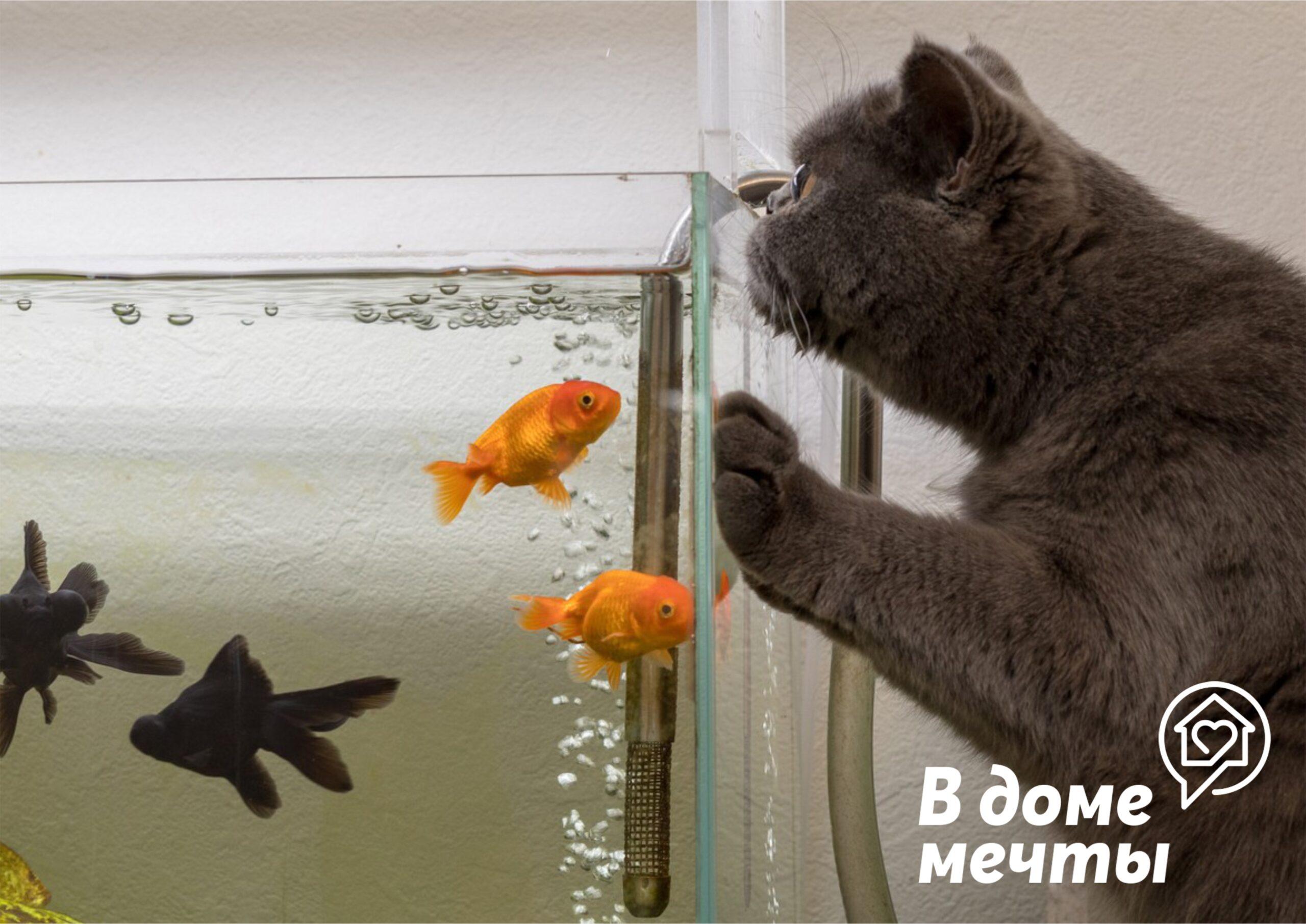 Каких обитателей аквариума точно не съест кот