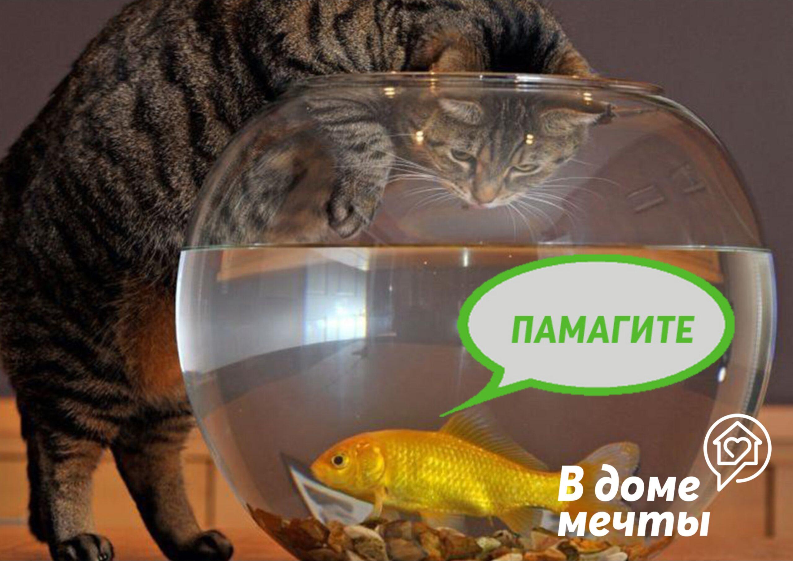 Итак, полезные советы для дома, в котором живет кот и появился аквариум