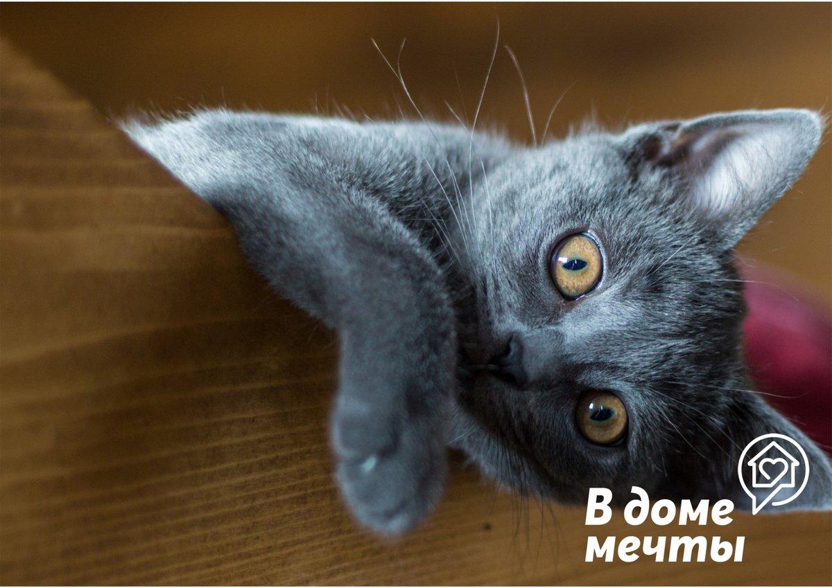 6 научно обоснованных причин завести кошку