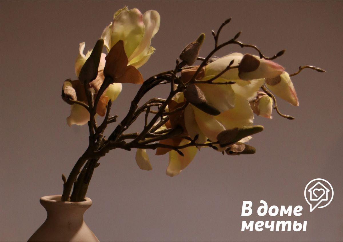 Кофейное дерево или семена кофе?