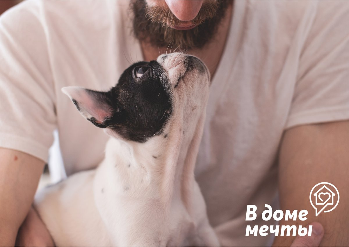Маленькие породы собак малоподвижны и неспортивны
