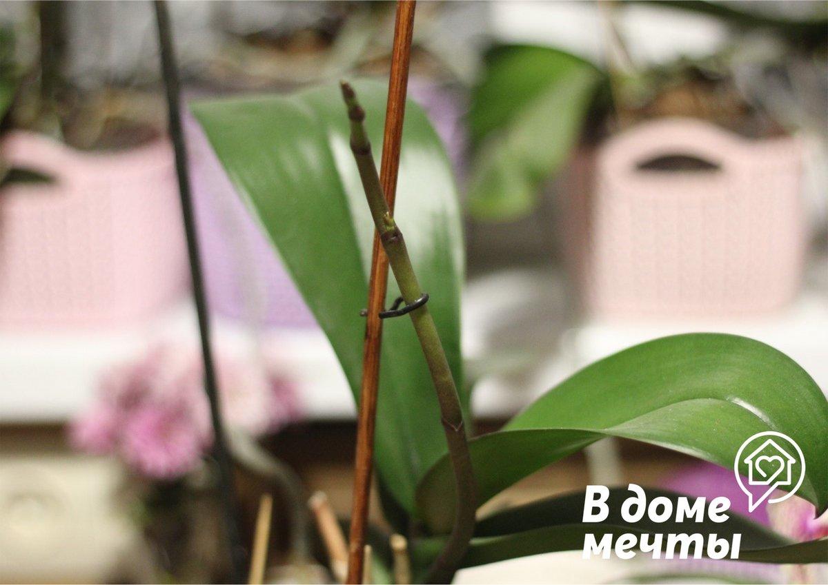 Как вызвать цветение у орхидеи: 5 основ успеха