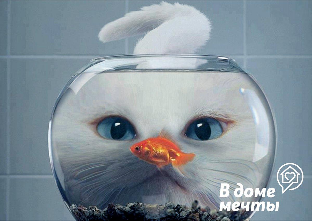 Аквариум и кот. Как сохранить рыбок?