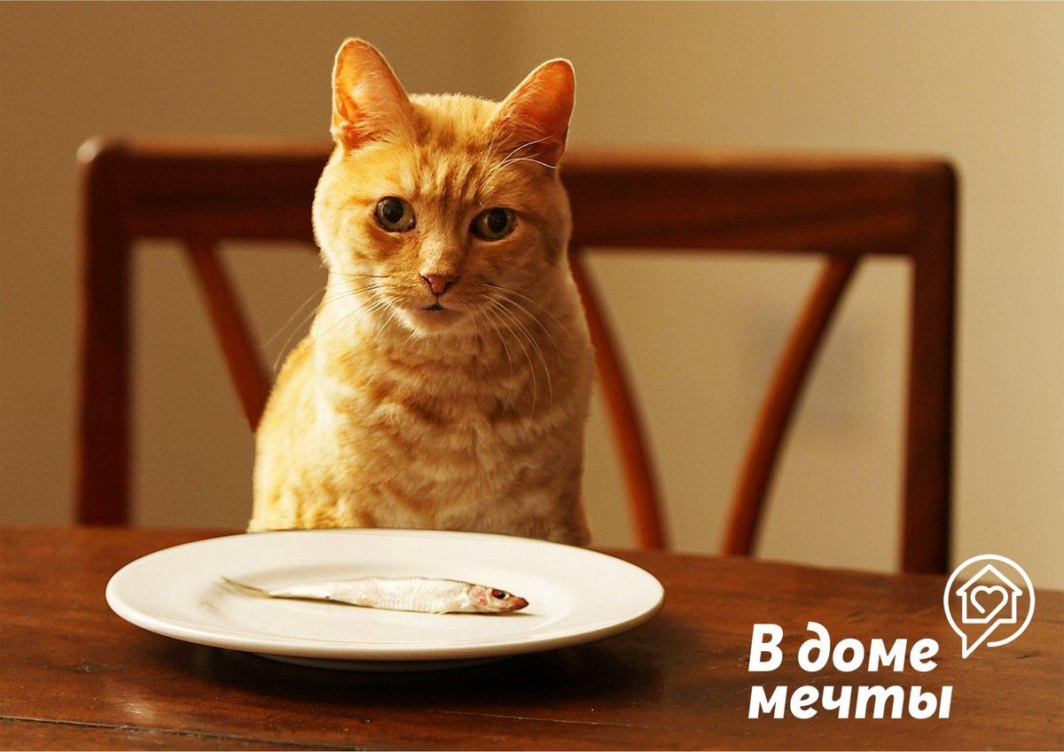 Топ-8 запрещенных продуктов для домашних животных