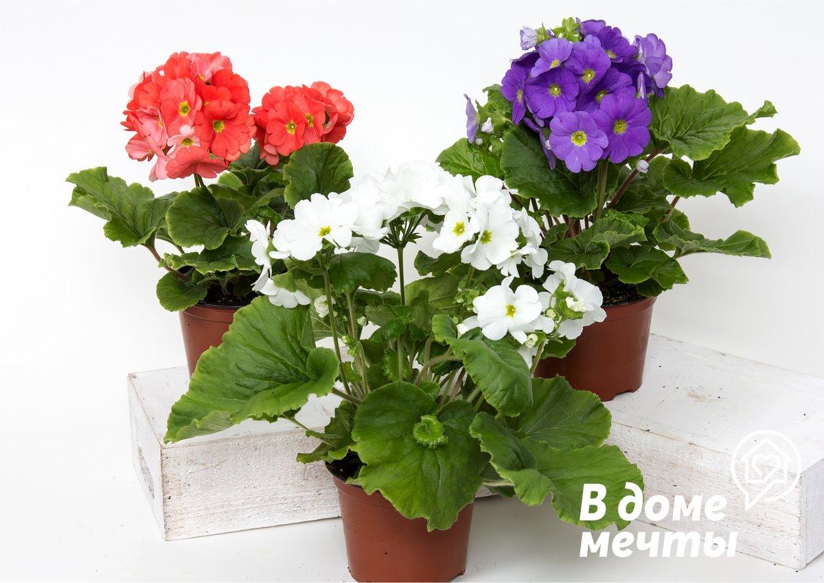 4 цветка, помогающие достичь благополучия в доме