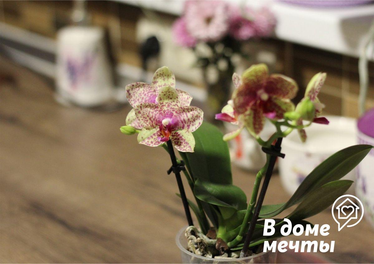 Удобрение орхидей зимой