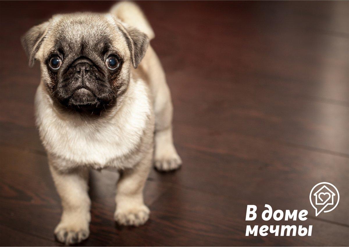 1. Маленькие собаки — тоже собаки