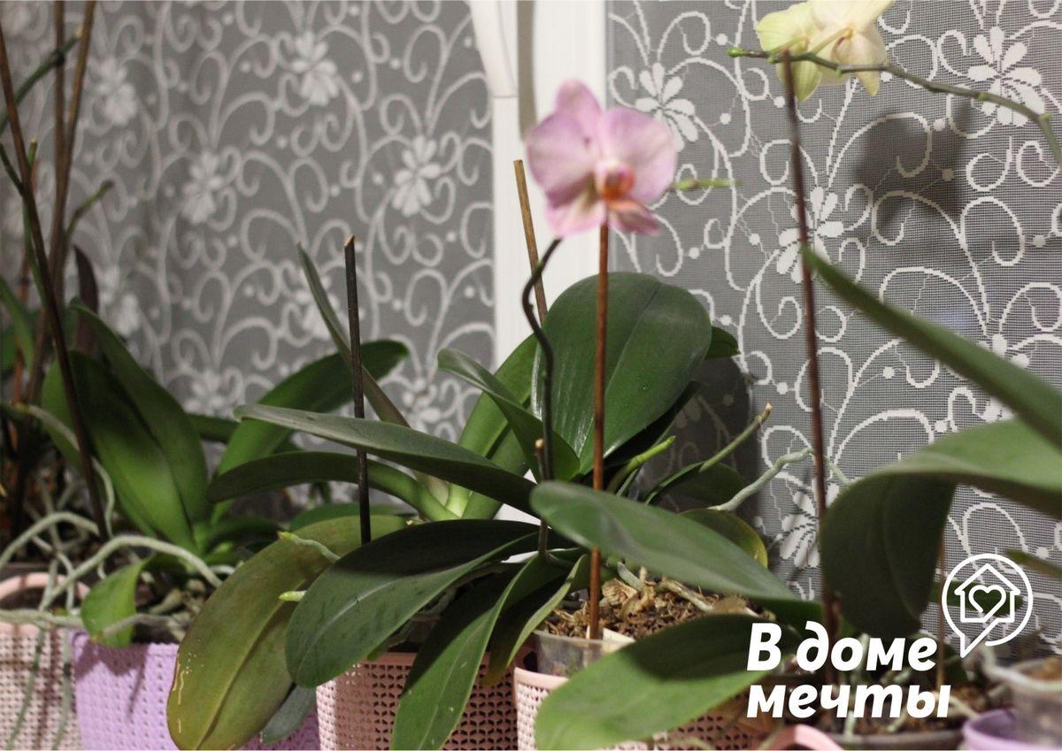 Рекомендации по зимнему уходу за цветком