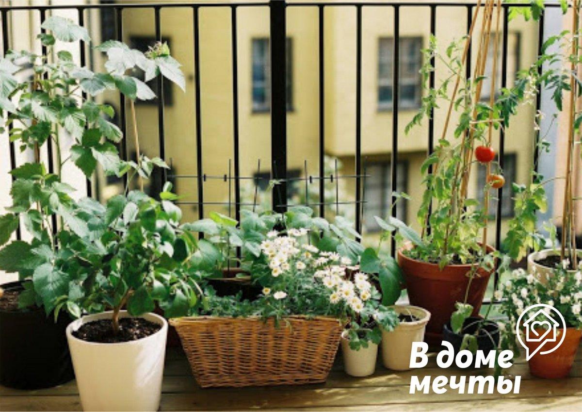 Балкон как огород