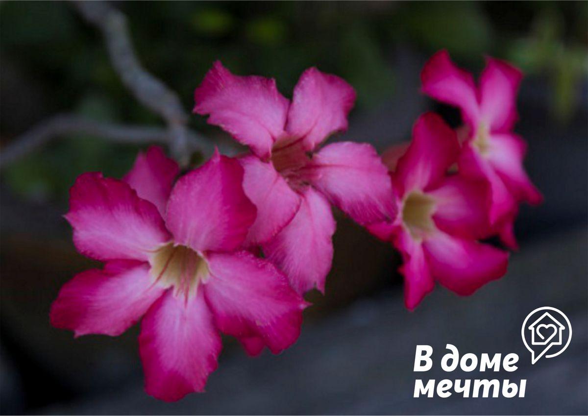 Нюансы освещения и расположения цветка