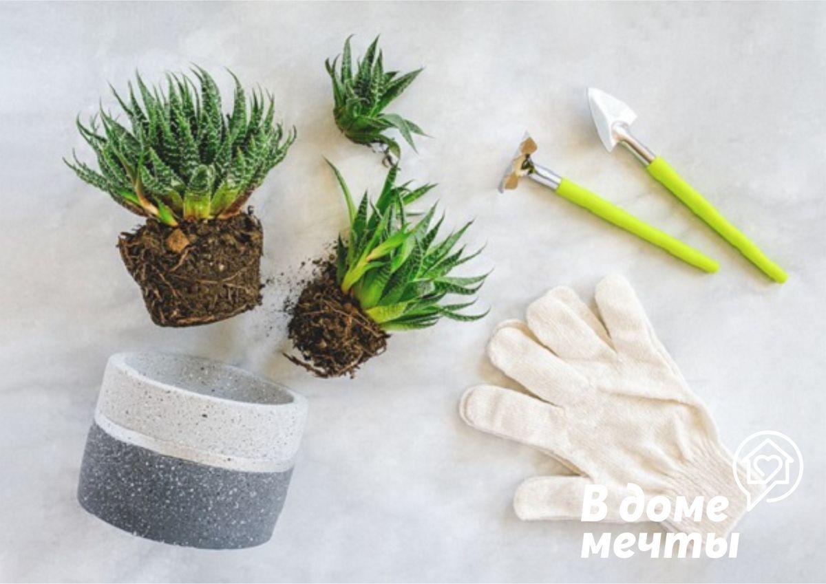 Как определить время пересадки комнатных растений