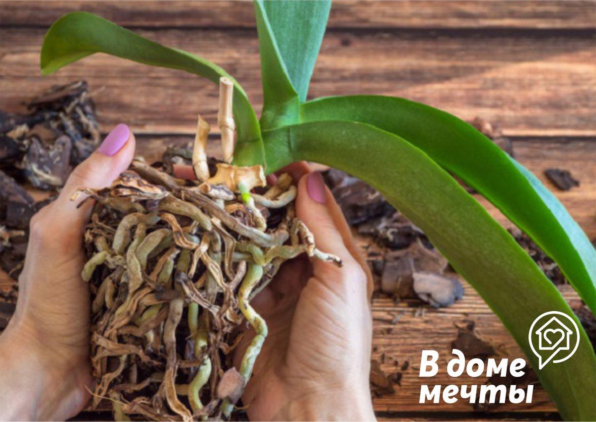 Минимум почвы и максимум корней