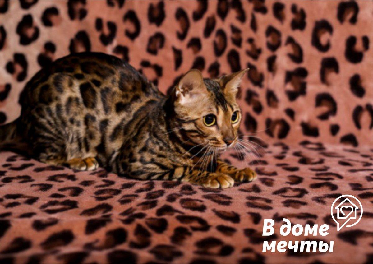Лучшие породы кошачьих для аллергиков