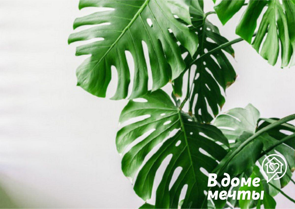 Вдали от солнца: топ-11 тенелюбивых комнатных растений