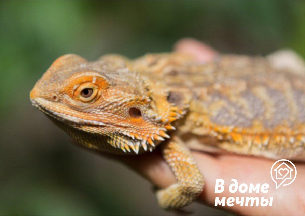 Питомец для террариума: лучшие рептилии для дома