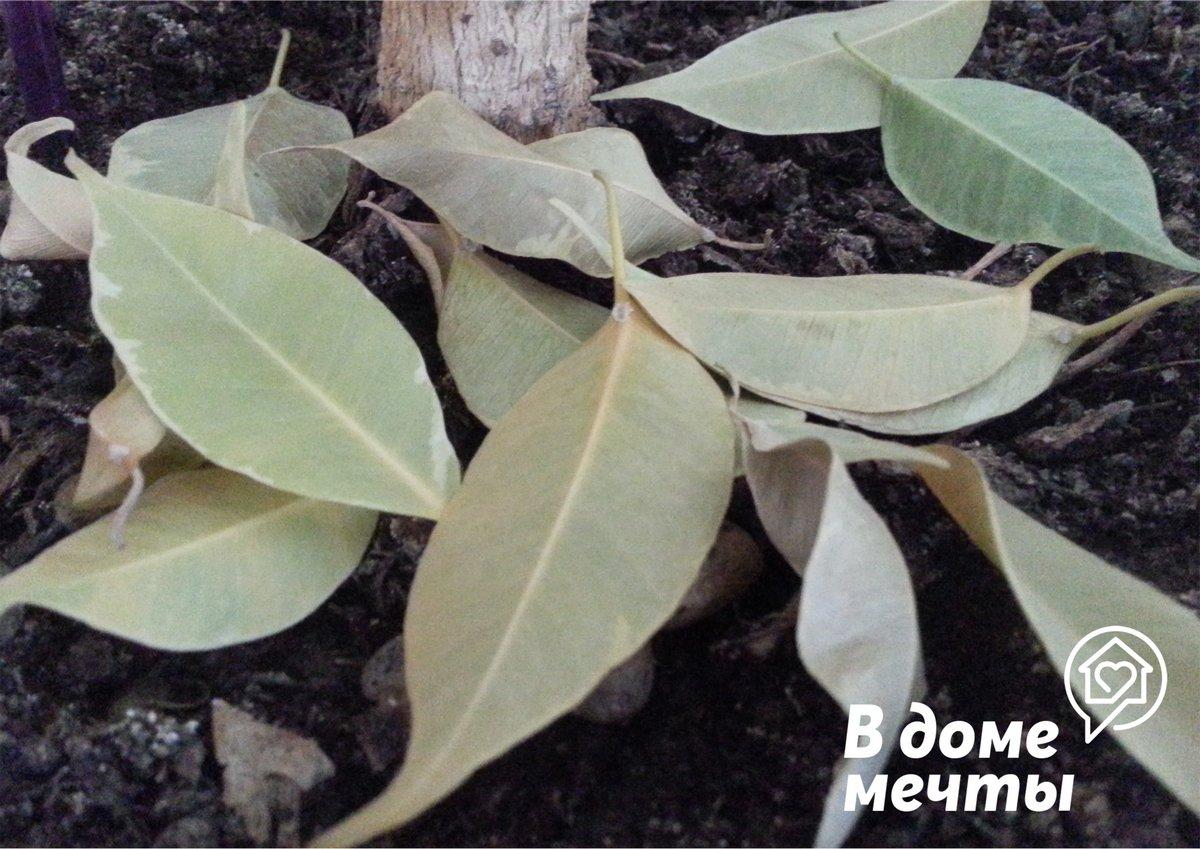 Комнатные растения: как повысить влажность воздуха