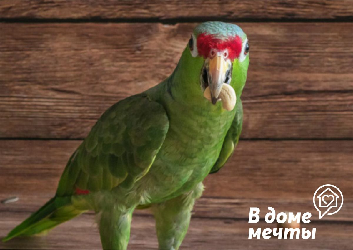 всем птицам подходят такие универсальные продукты
