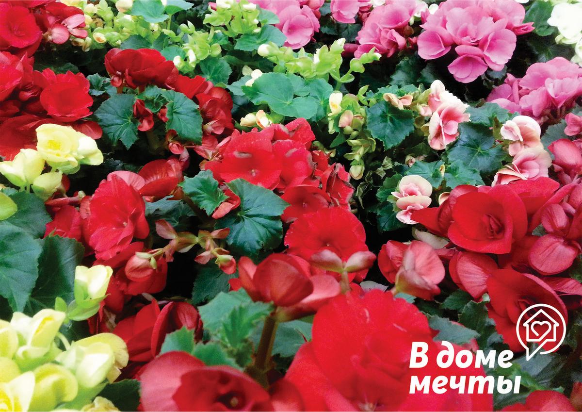 На что обращать внимание при покупке растений в магазине?
